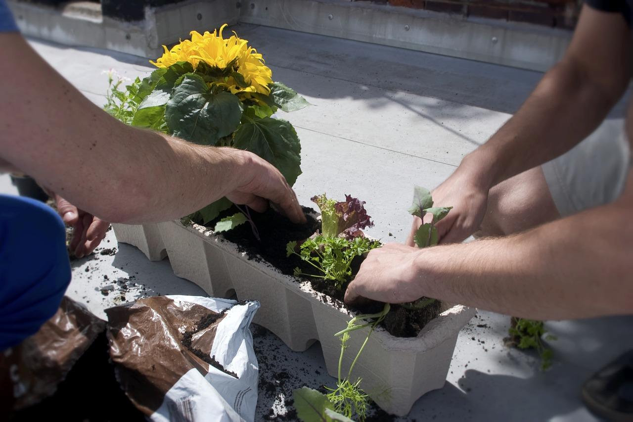 Zelenina pestovaná na balkóne