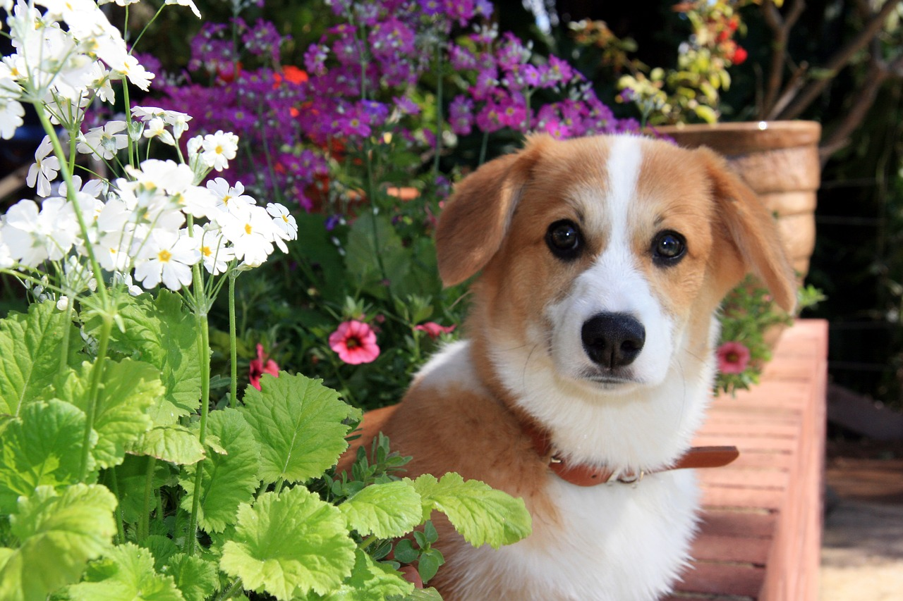 Zabráňte psíkom behať po záhonoch