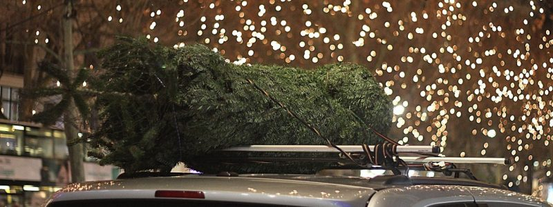 Čo robíte s vianočným stromčekom po Vianociach?