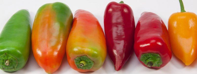 Papriky vysievame v januári