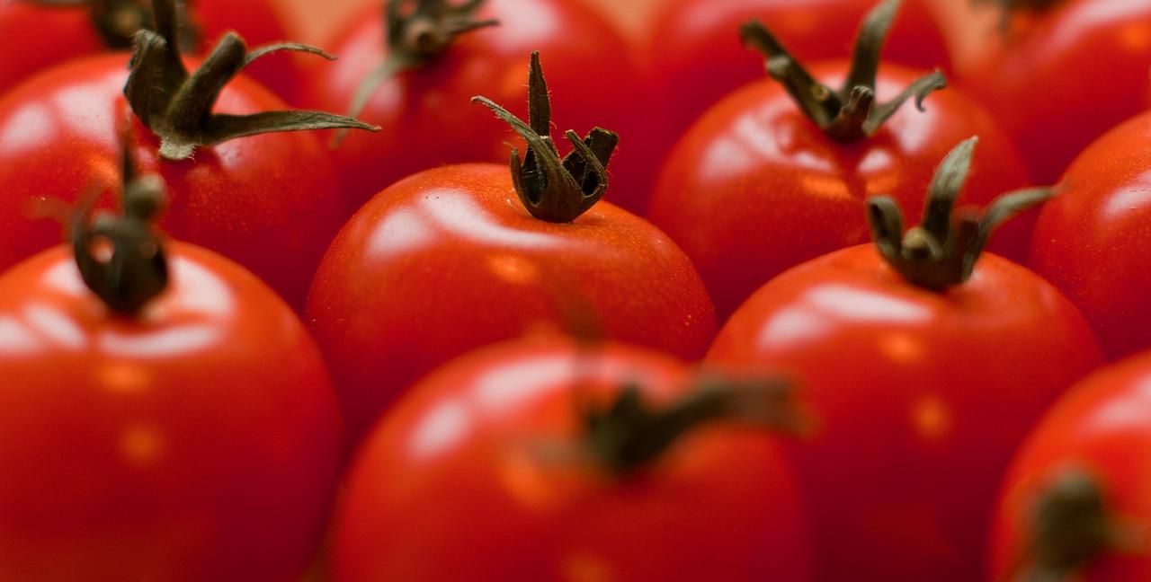 Kedy a ako vysievame paradajky?