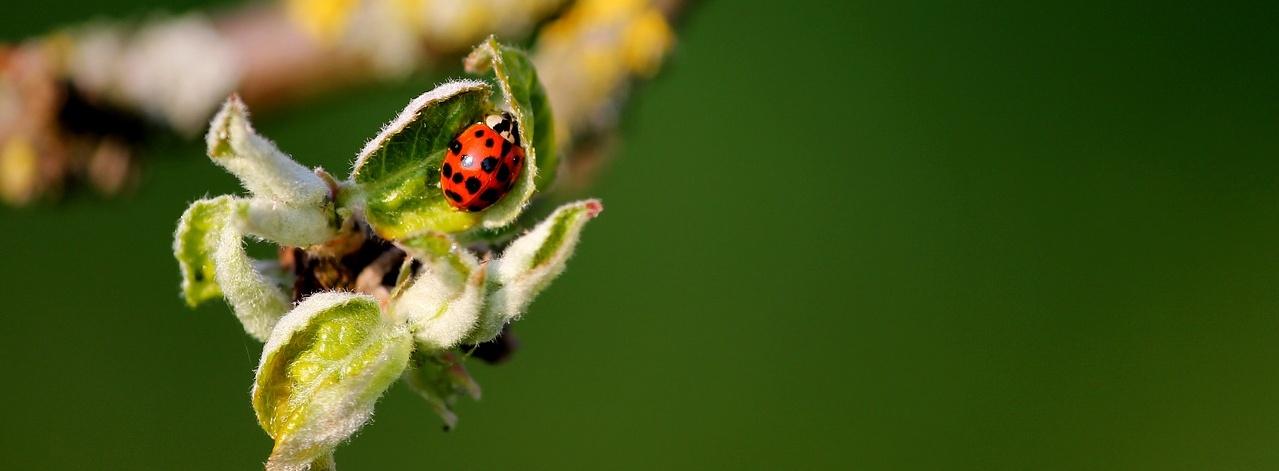 Chemické postreky proti hmyzu škodia vašej záhrade
