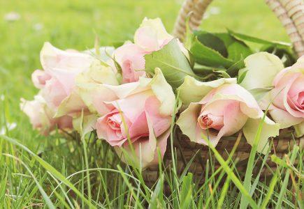Kedy strihať ruže