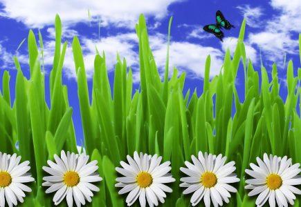 Tipy na najlepšie darčeky pre záhradkárov: Z týchto budú na vetvi!